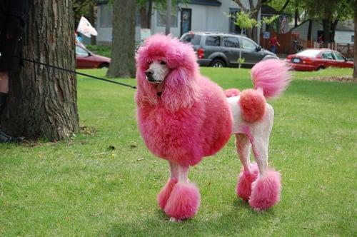 Perro. Pink dog-1